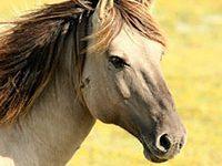 Fotografía donde se muestra la cabeza de un caballo.