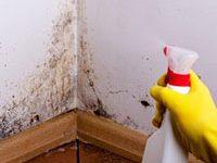 Fotografía de una persona con una botella spray. Se está echando el spray en una pared con moho.