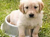 Fotografía de cachorro