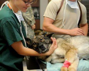 Fotografía de un perro en la veterinaria