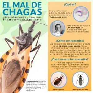 Infografía El Mal de Chagas: el texto corresponde a un resumen del texto en la página Web