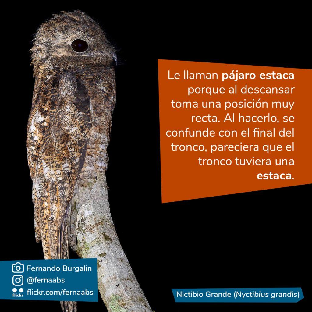 Fotografía del pájaro estaca